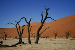 019-Dead-vlei-Namibië
