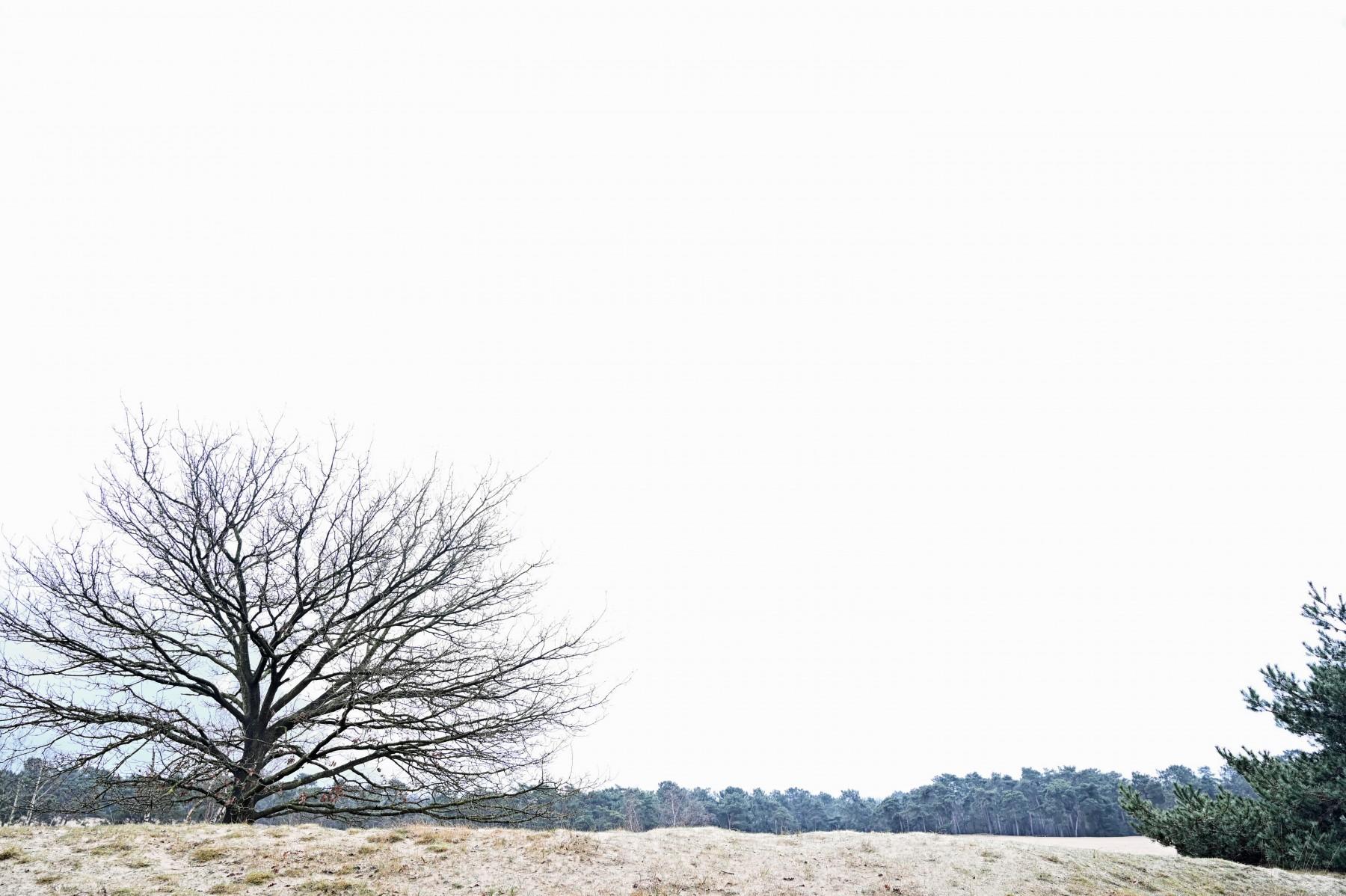 Bianca Dekkers-van Uden, Loonse en Drunense Duinen