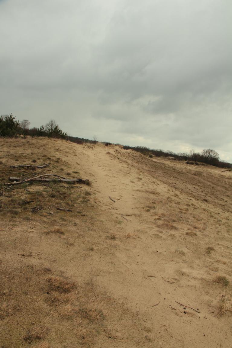 loonse-drunense-duinen00000008