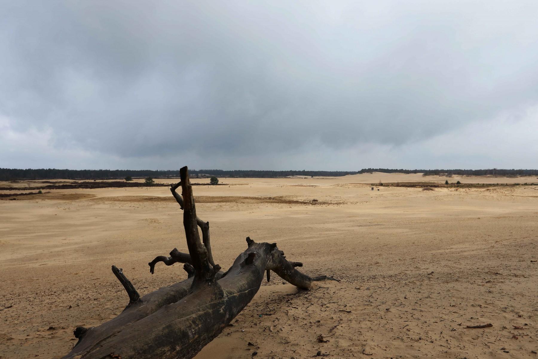 loonse-en-drunense-duinen
