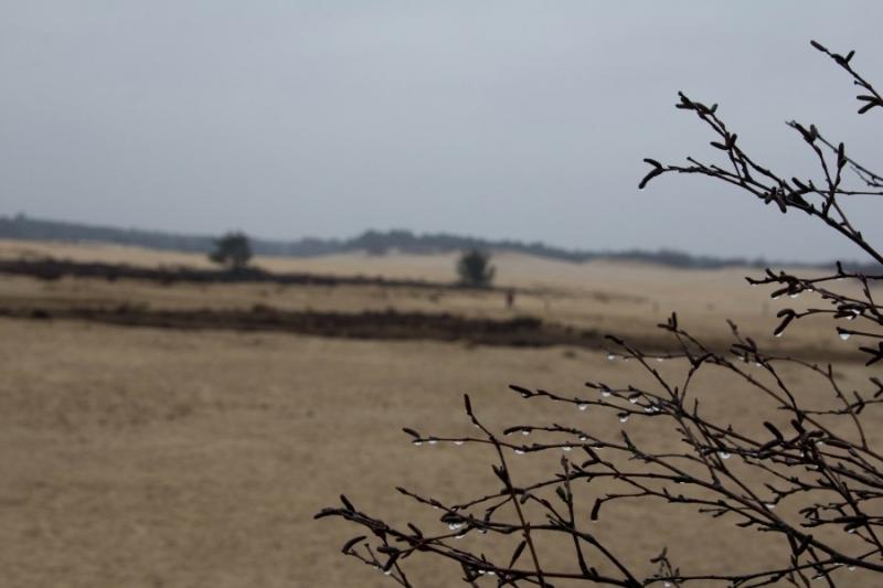 Fotograaf: Astrid Sanders 'Loonse en Drunense duinen'