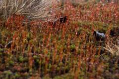 Fotograaf: Astrid Sanders 'Kleurrijk mos'