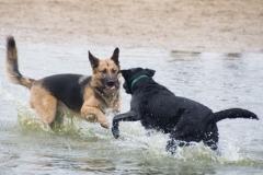 Fotograaf: Astrid Sanders 'Spelen in het water'