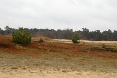 Fotograaf: Carry Megens - Rood bemoste duinen