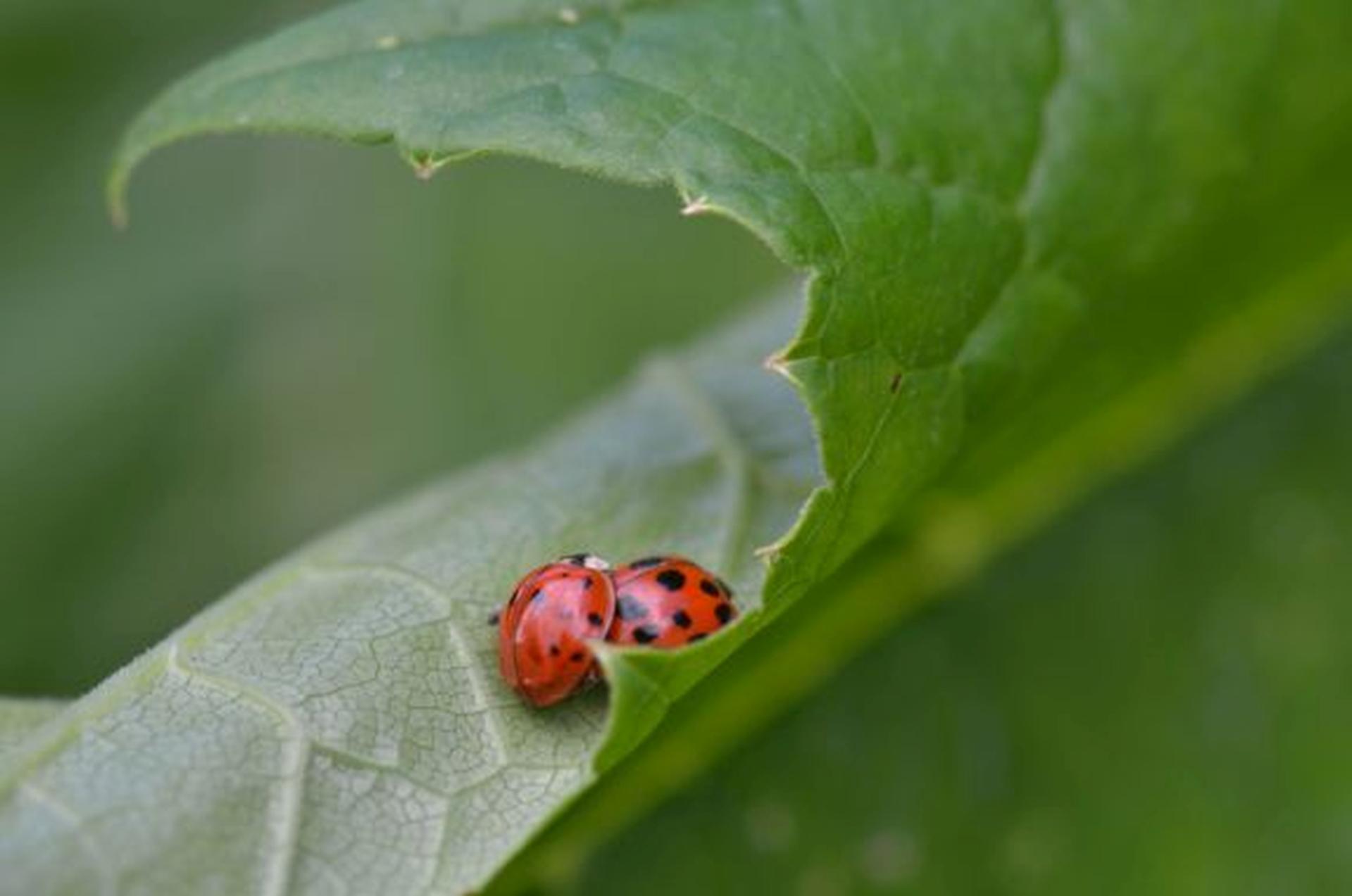 Fotograaf: Ans Heisen 'Lieveheersbeestjes'