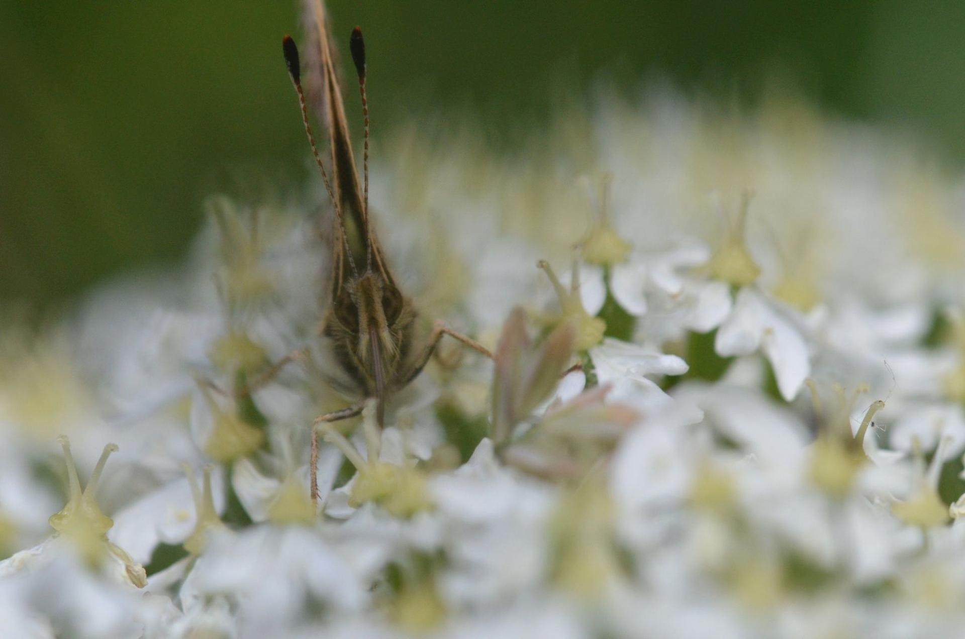 Fotograaf: Ans Heisen 'Vlinder'