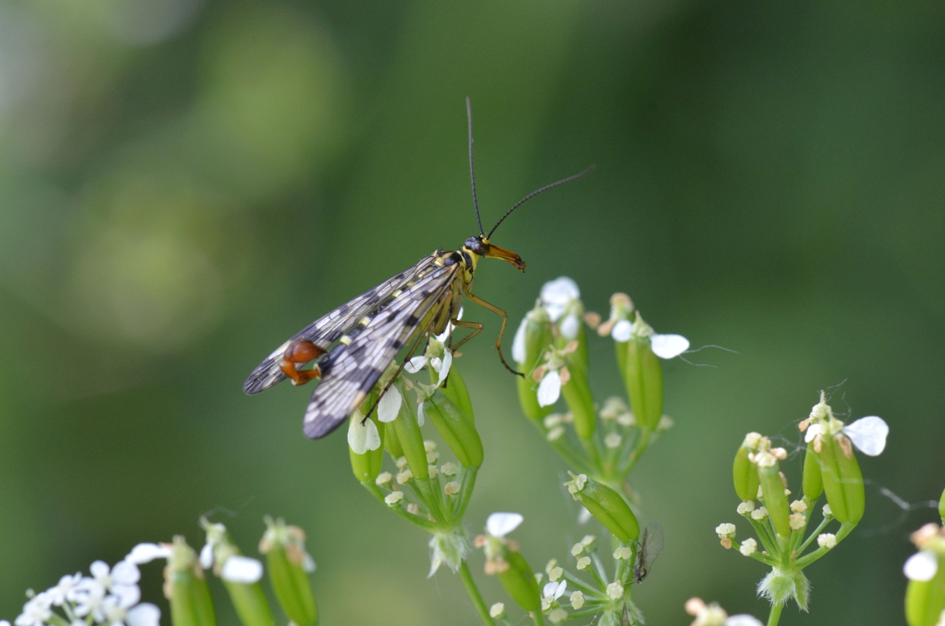 Fotograaf: Ans Heisen 'Insect'