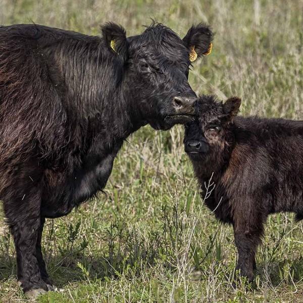 Els Baltjes: moeder en jong