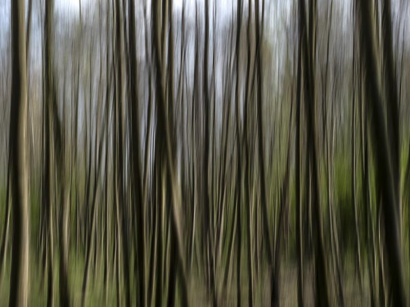 Els Baltjes: nature art 2