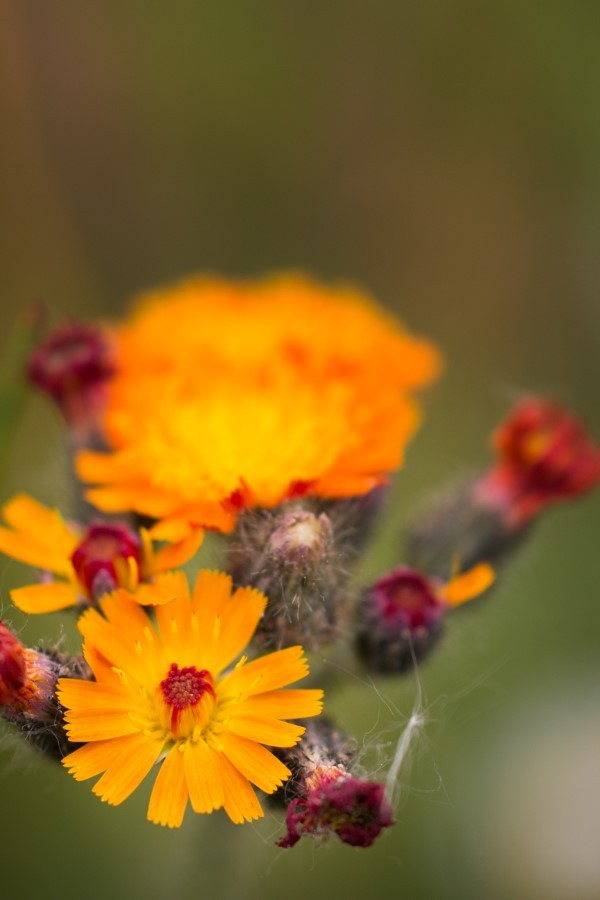 Astrid Sanders: Bloemen