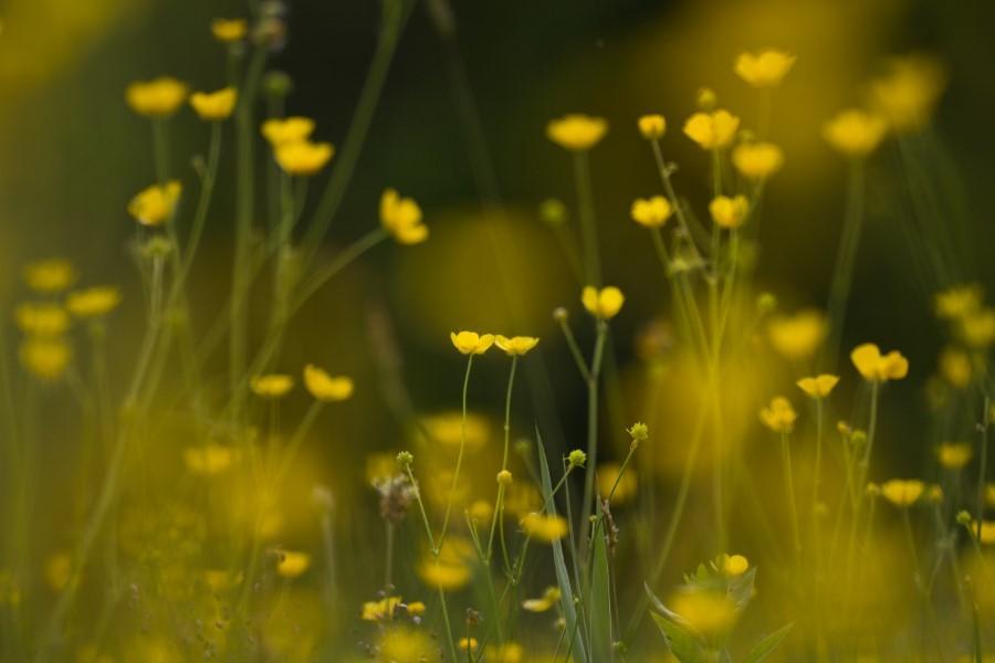 Astrid Sanders: Boterbloemen