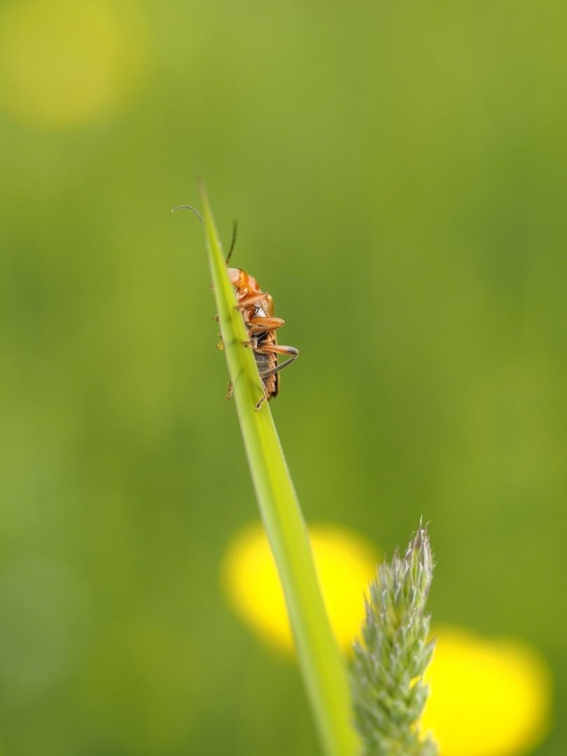 Chris Castelijns: Insect
