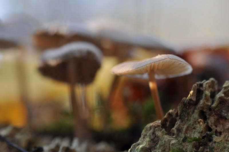 Bianca Dekkers-van Uden, paddenstoelen Horssen
