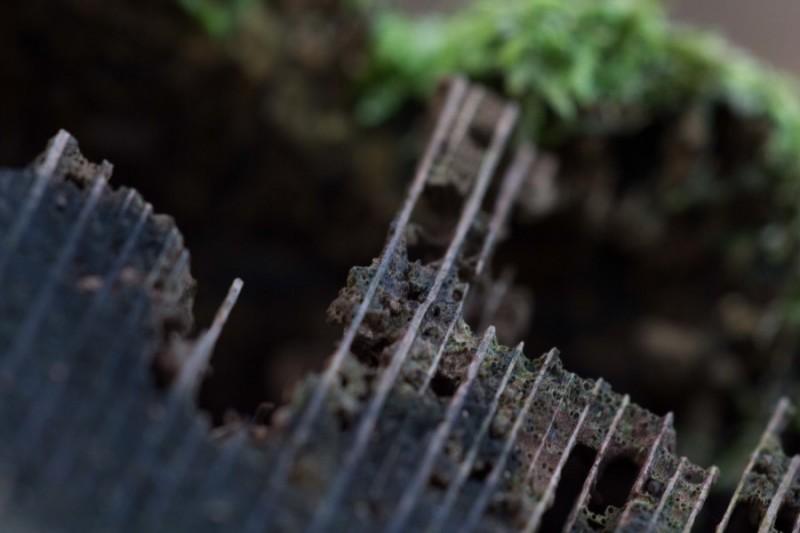 Astrid Sanders: Oud hout