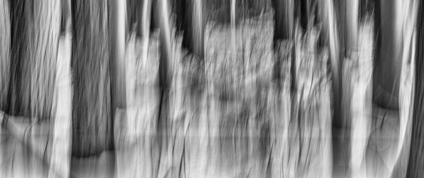 bewogen-bos-met-sneeuw-zwart-wit-_wow8184-middel