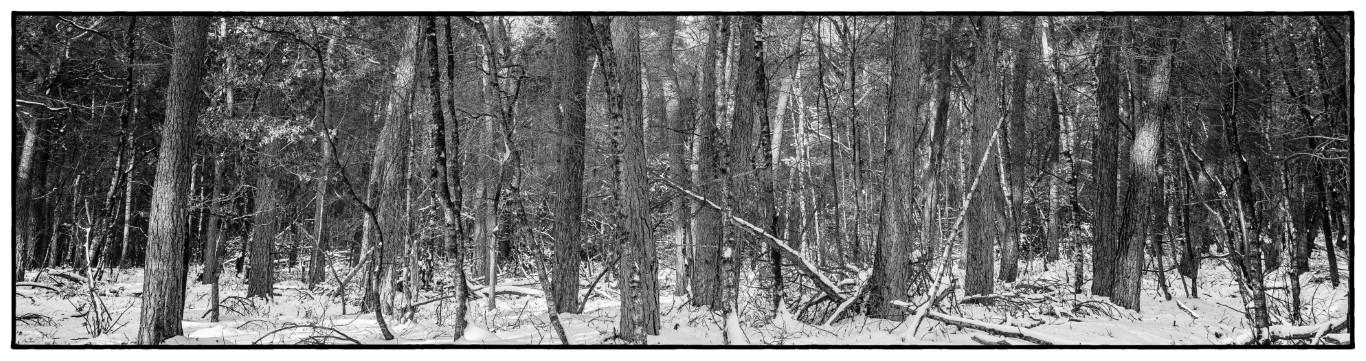 bos-stammen-met-sneeuw-zw-wit_wow8163-middel