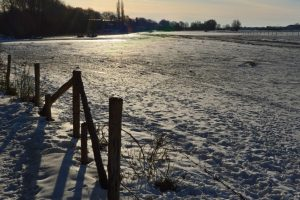Plantage Willem III winter