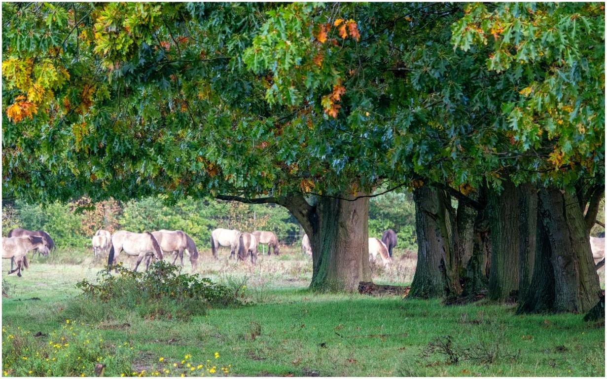 Jeroen Hoogakker: bomen en paarden kleur