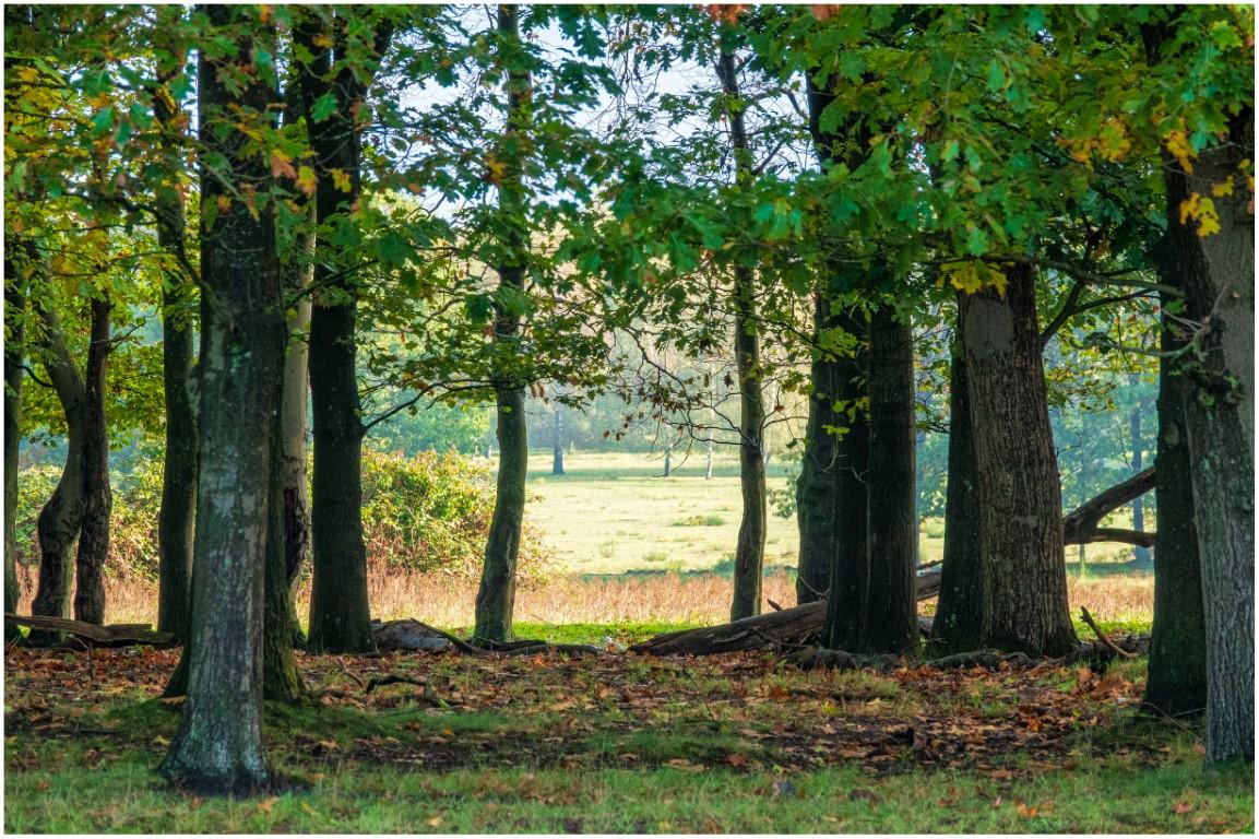 Jeroen Hoogakker: bos zonder paard kleur