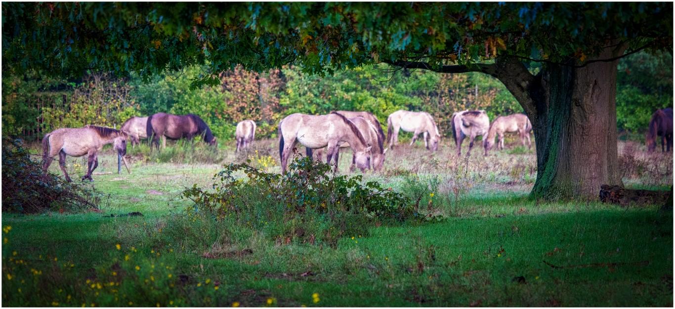 Jeroen Hoogakker: paarden kleur