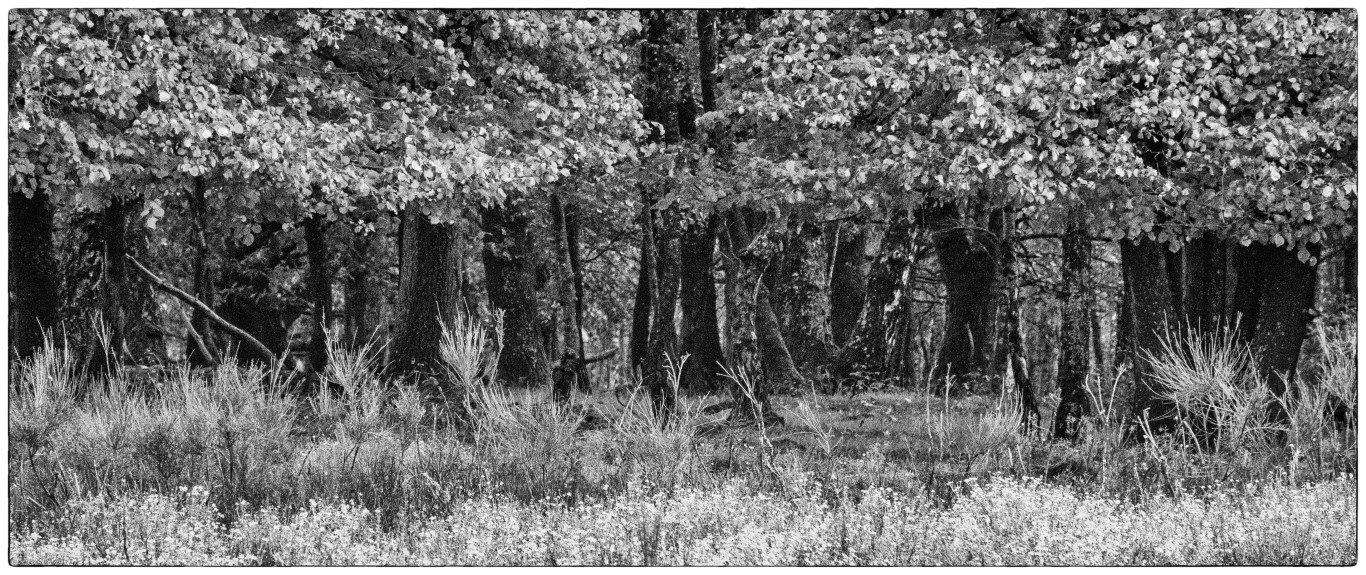 Jeroen Hoogakker: randjes bos en geel gras zwart wit