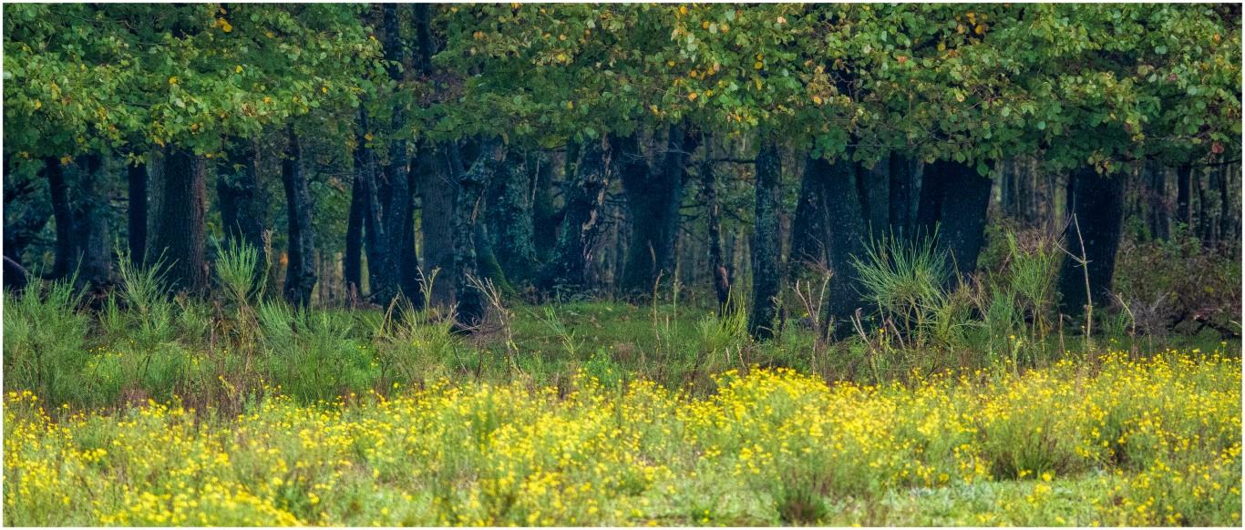 Jeroen Hoogakker: randjes bos en stammen 2 scherp kleur