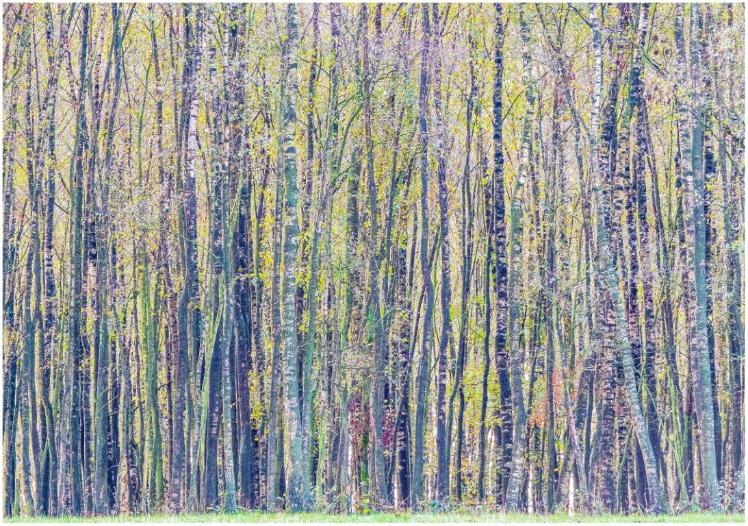 Jeroen Hoogakker: stammetjes na luminar4 kleur
