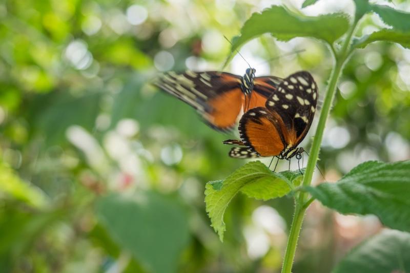 Fotograaf; Bert van Zijderveld 'Vlinder'