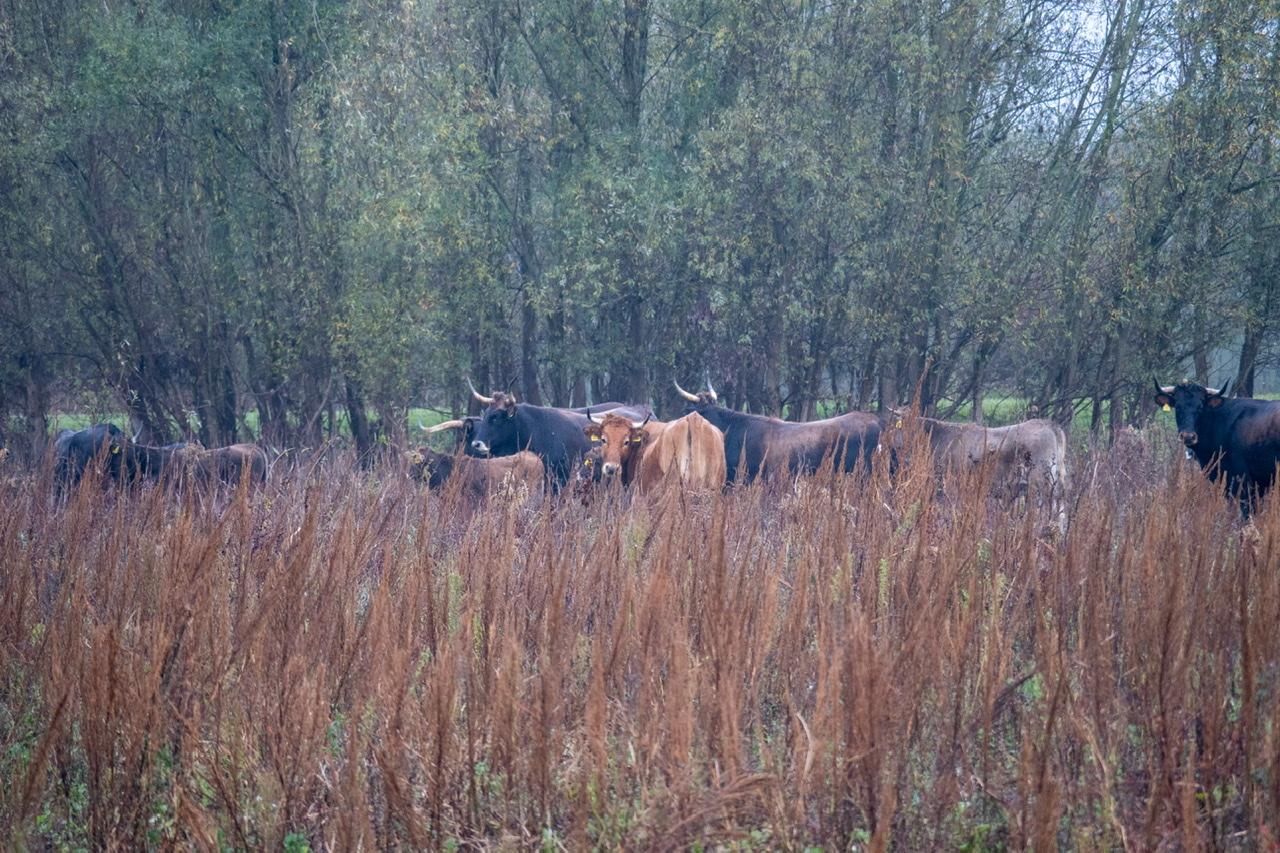 Bert van Zijderveld Uiterwaarden Boven-Leeuwen