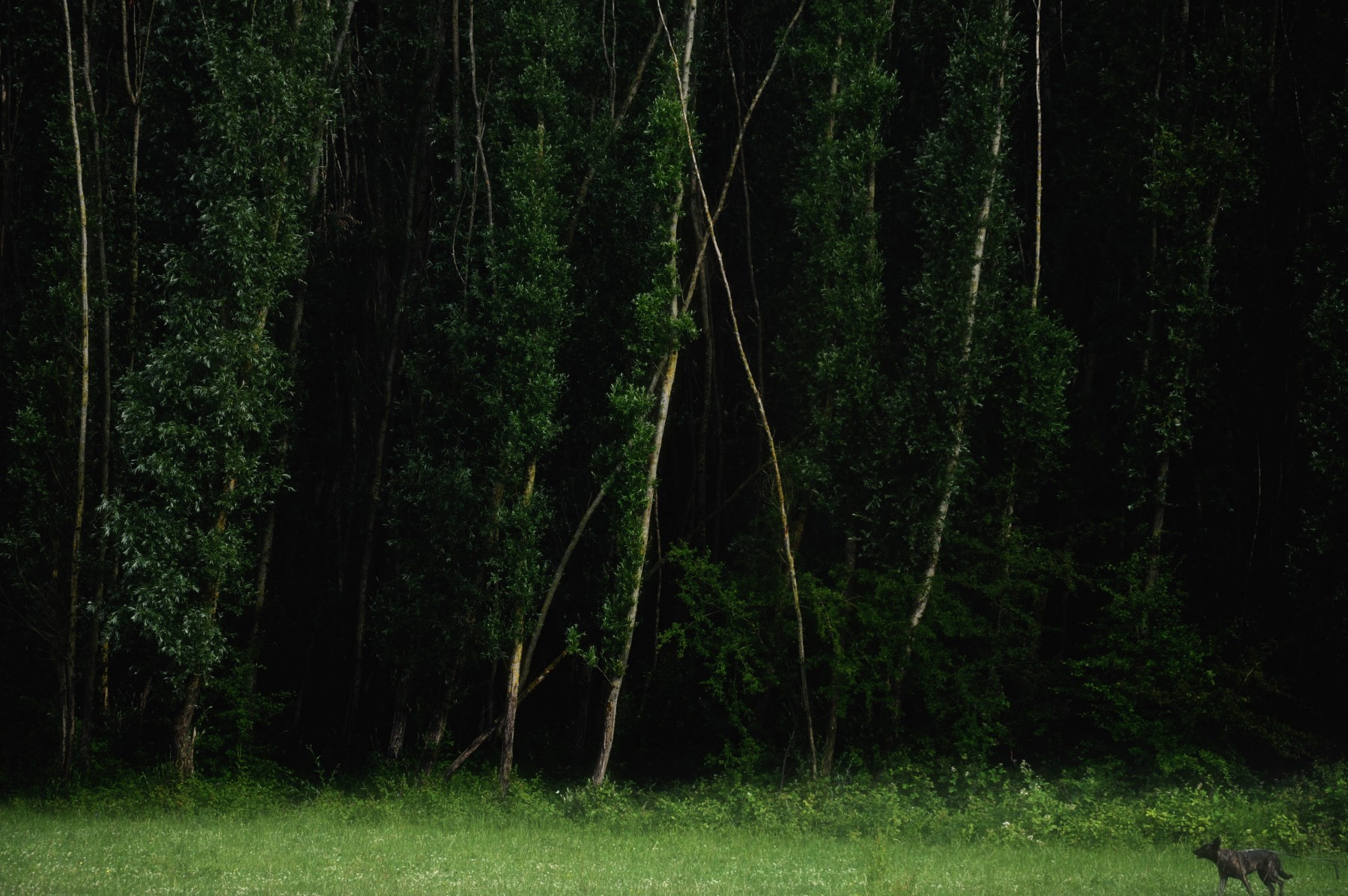 Bianca Dekkers-van Uden, Het donkere bos, Uiterwaarden Wageningen