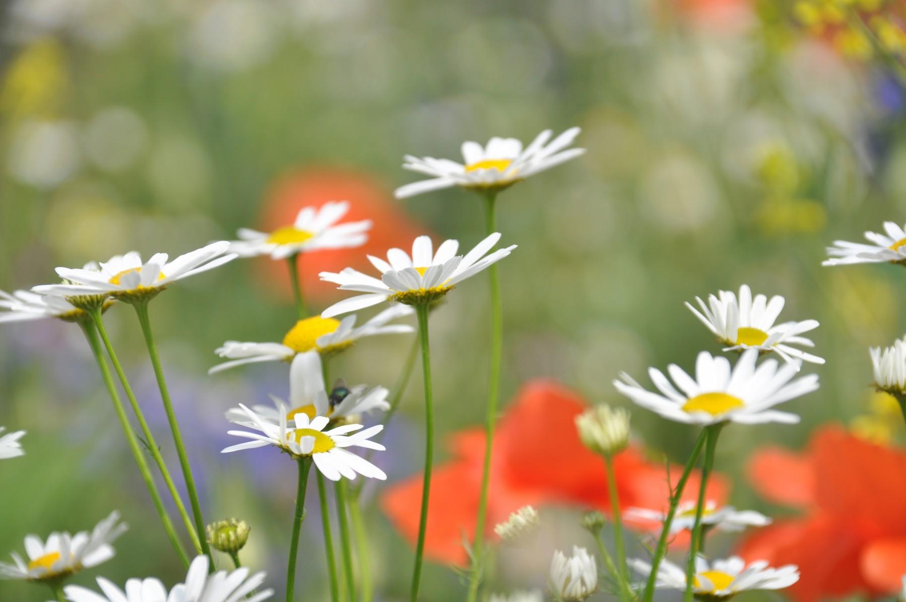 Bianca Dekkers-van Uden, veldbloemen Uiterwaarden Wageningen