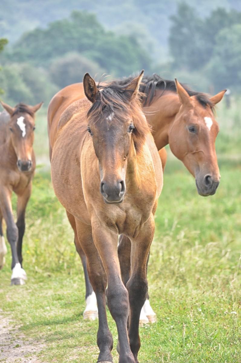 Bianca Dekkers-van Uden, wilde paarden in aantocht, Uiterwaarden Wageningen