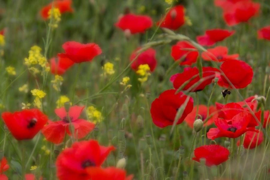Astrid Sanders: Kleurrijk