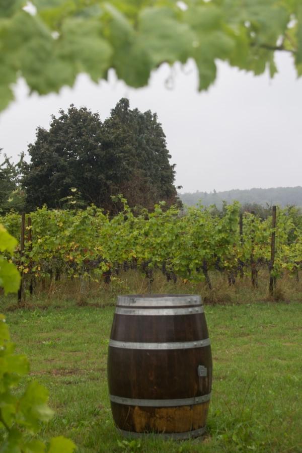 Astrid Sanders: Wijnvelden