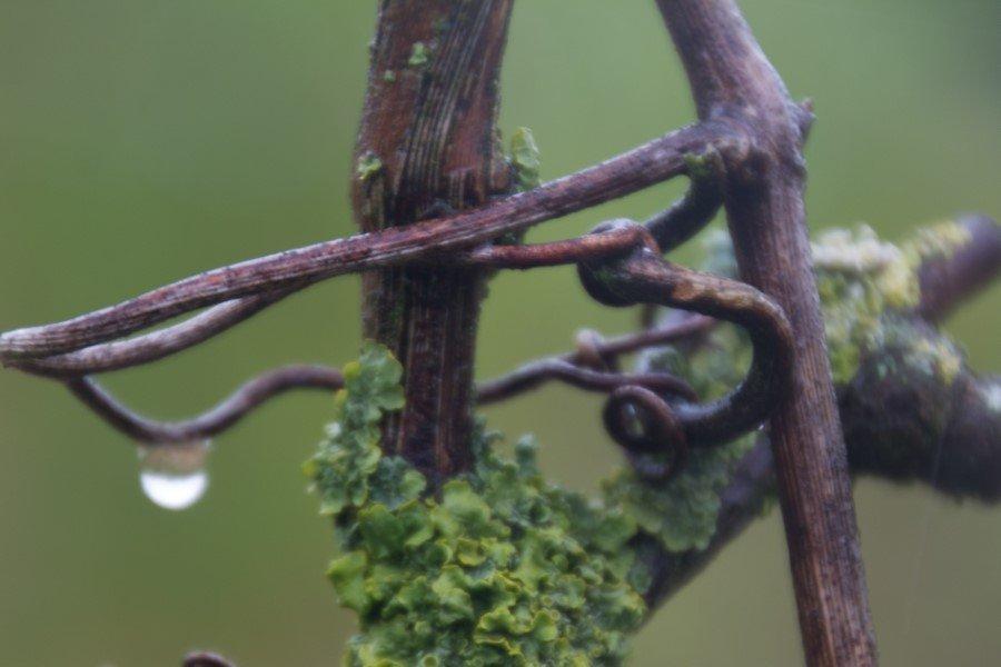 Astrid Sanders: Druivenhout
